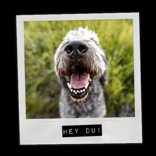 Polaroid Lustiges Hundefoto