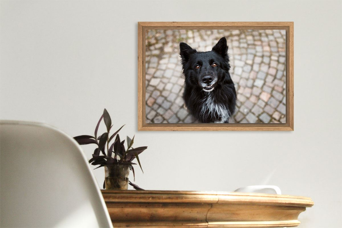Wandbild-Alu-Dibond-Gerahmt-Schattenfuge-Hundefotografie
