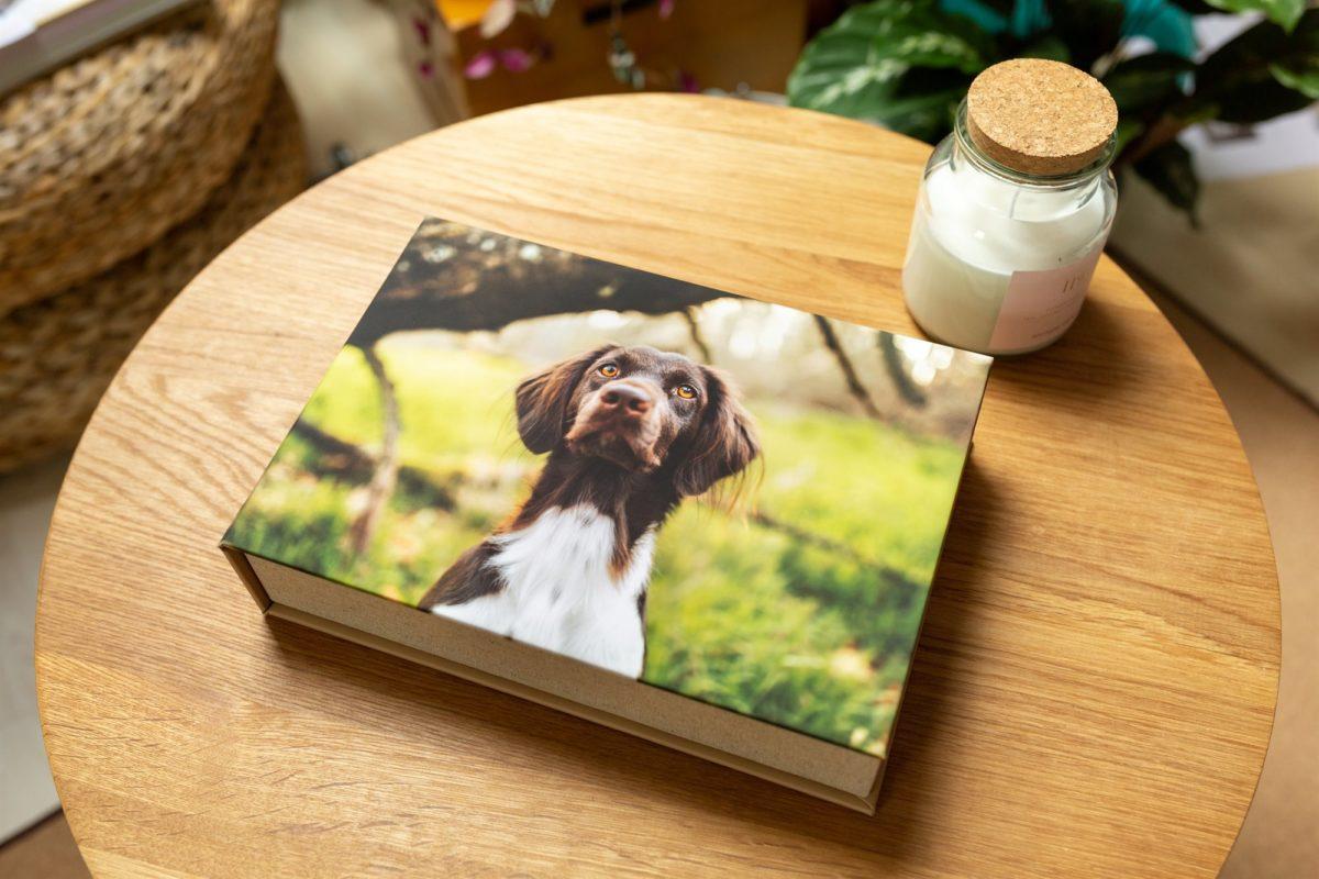 Box-für-Fotos-Hunde