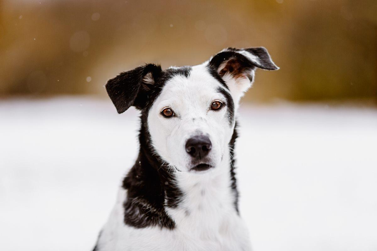 Coaching-Workshop-Mentoring-Bildbearbeitung-Tierfotografie-Hundefotografie (1)