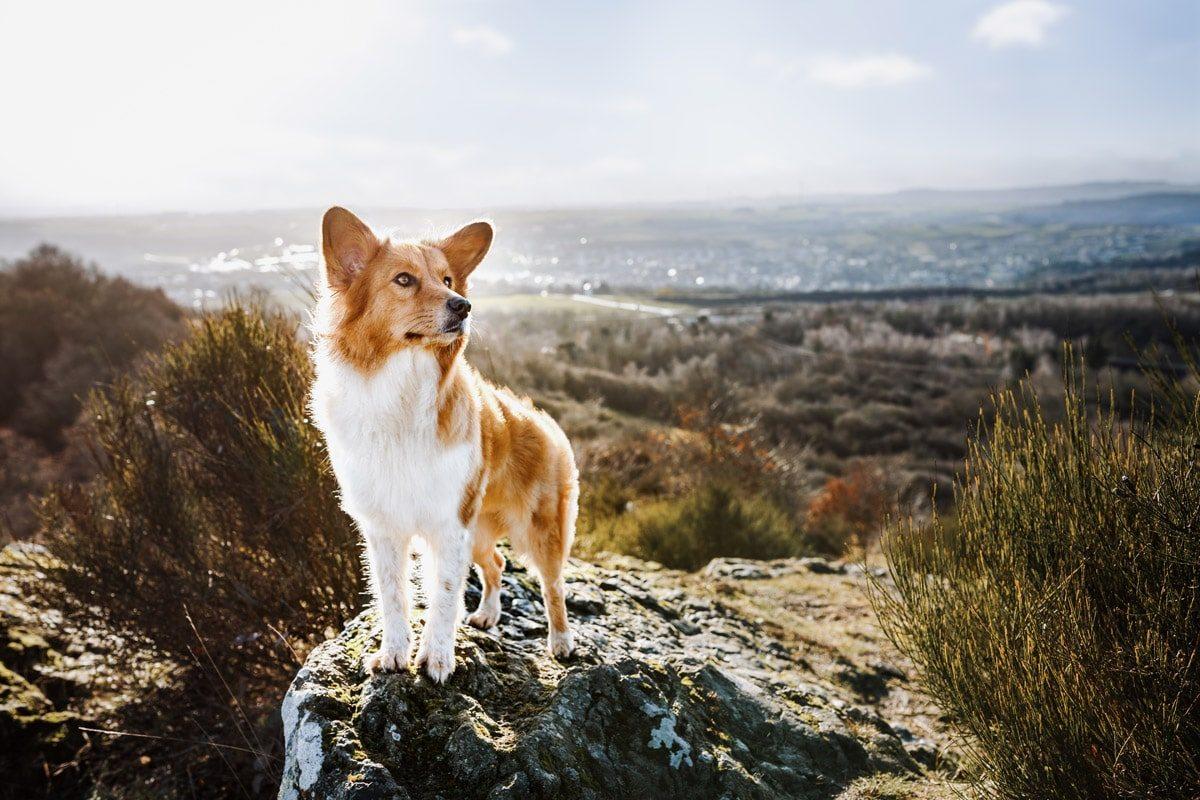 Tiere Unterfranken Würzburg Hunde Fotoshooting