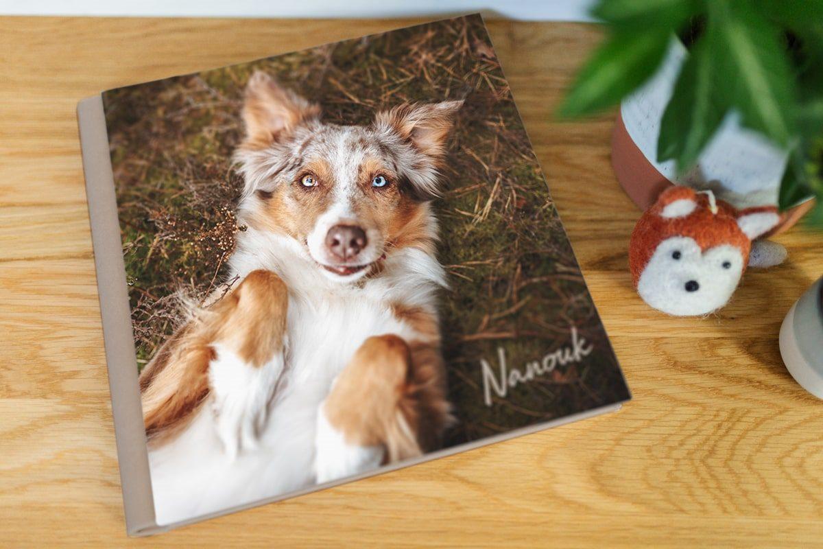 Fotoalbum-Premium-High-Class-Hundefotografin-Hunde-Fotograf-Hund-Würzburg-Yasemin-Ikibas (4)-min
