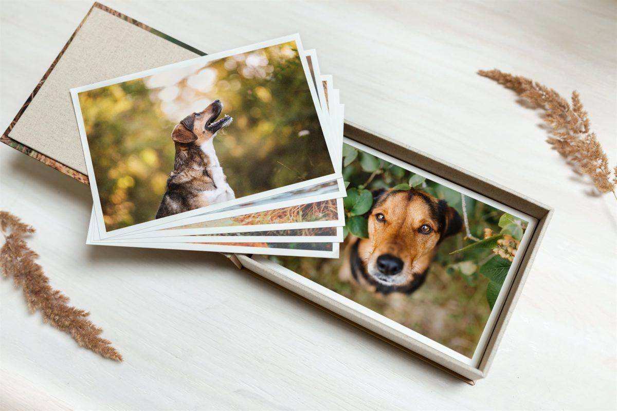 Fotoprodukte Hund