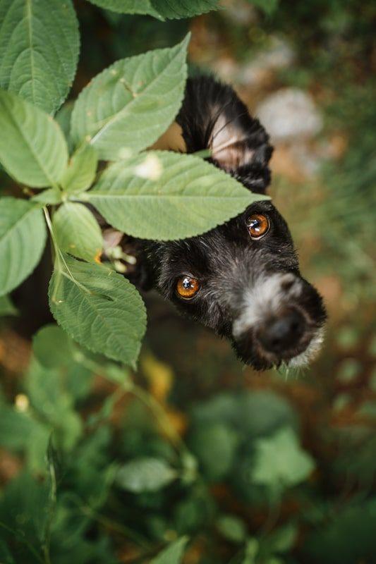 Haustier-Hundefotoshooting-Tierfotograf-Fotograf-Tierfotografie-Hundefotograf-Bamberg-Würzburg-Schweinfurt-Kitzingen-Tierschutzhund-Tierschutz-Hund (10)
