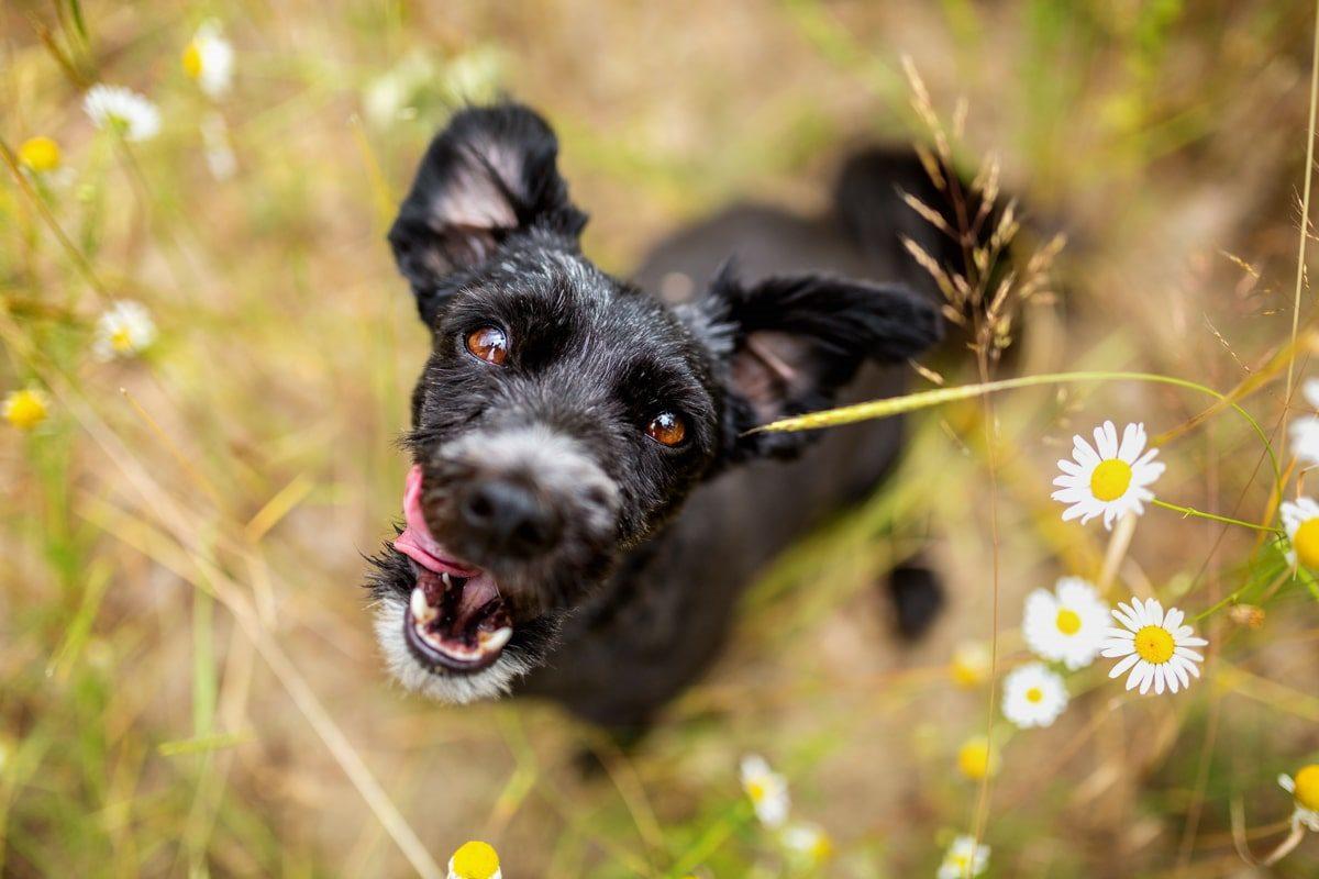 Haustier-Hundefotoshooting-Tierfotograf-Fotograf-Tierfotografie-Hundefotograf-Bamberg-Würzburg-Schweinfurt-Kitzingen-Tierschutzhund-Tierschutz-Hund (9)