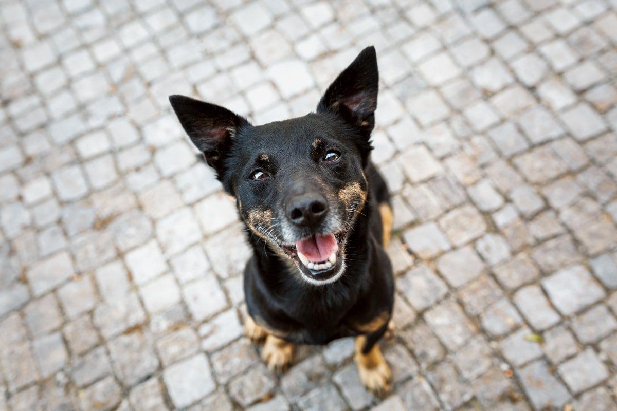 Haustier-Hundefotoshooting-Tierfotograf-Fotograf-Tierfotografie-Hundefotograf-Bamberg-Würzburg-Schweinfurt-Kitzingen-Tierschutzhund-Tierschutz-Hund-Karlo-Bunte-Hunde