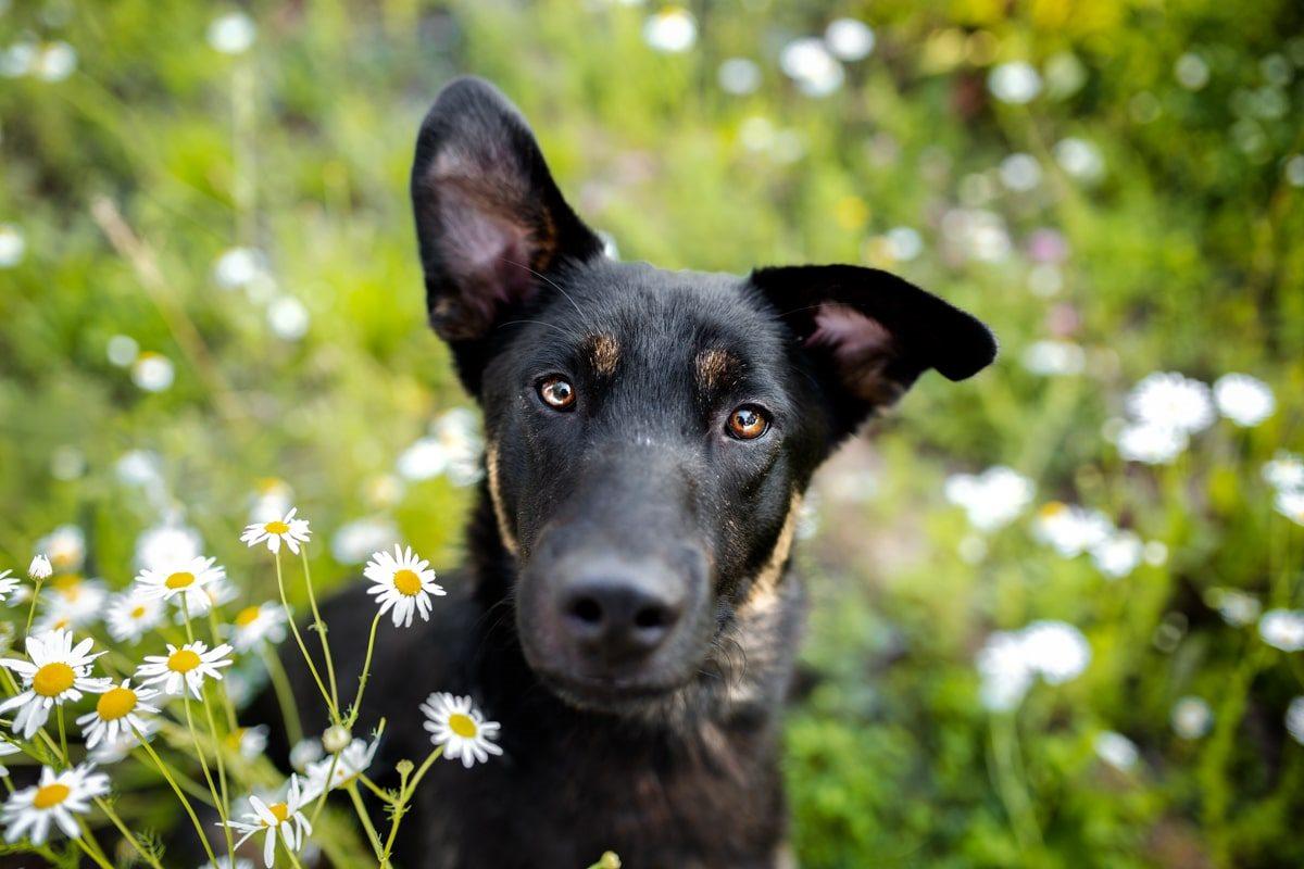 Haustier-Hundefotoshooting-Tierfotograf-Fotograf-Tierfotografie-Hundefotograf-Bamberg-Würzburg-Schweinfurt-Kitzingen-Tierschutzhund-Tierschutz-Hund-Woody-Bunte-Hunde