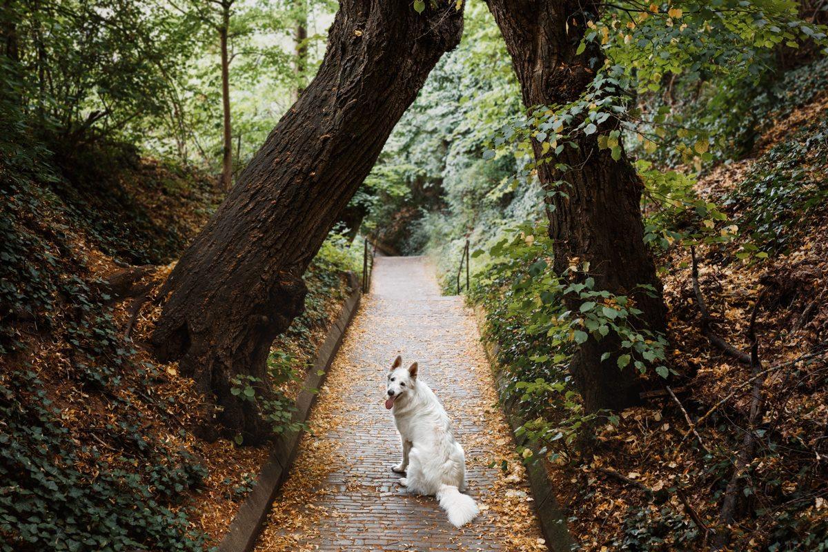 Hundefotograf-Hundefotografie-Würzburg-Bamberg-Coburg-Erlangen-Dobermann-Stadtkalender-Kalender 2021-Hundekalender-WüDogs-Würzburg Hunde-weißer-Schäferhund