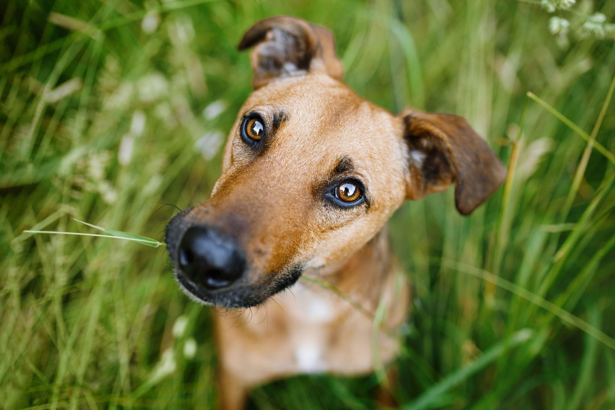 Hundefotograf-Hundefotografie-Würzburg-Bamberg-Schweinfurt-Kitzingen-Erlangen-Coburg-Beno-Tierschutzhund