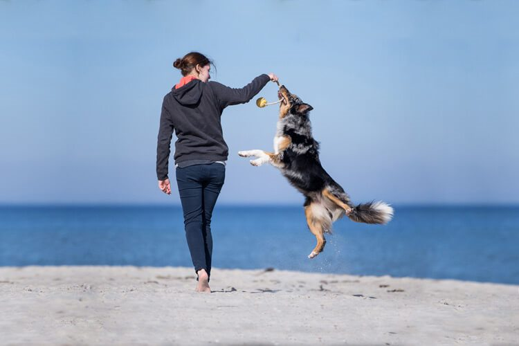 Tierfotografin | Hundefotografin | Yasemin Ikibas