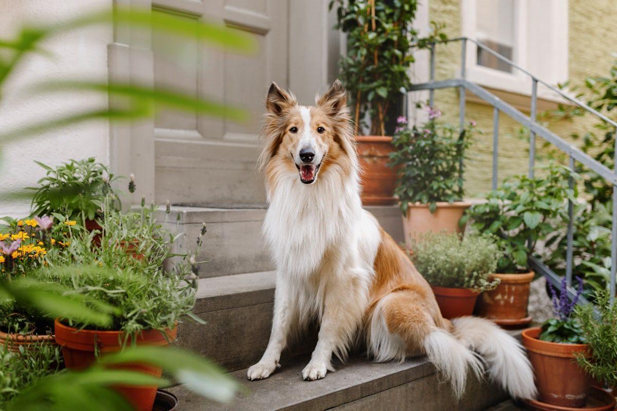 Hundefotoshooting Bamberg - Hunde-Fotoshooting-Erlangen-Schweinfurt-Fürth-Coburg (4)