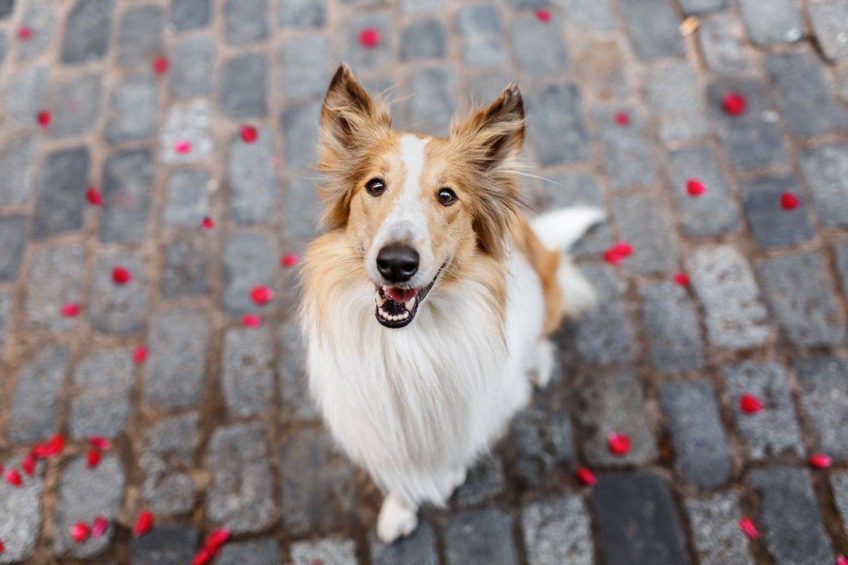 Hundefotoshooting Bamberg - Hunde-Fotoshooting-Erlangen-Schweinfurt-Fürth-Coburg