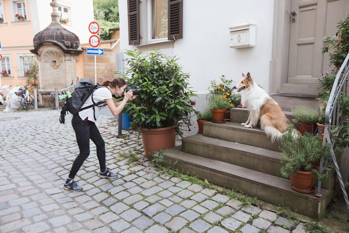 Hundefotoshooting-Hunde-Fotograf-Bamberg-Würzburg-Tierfotograf-Tierfotografie (6)