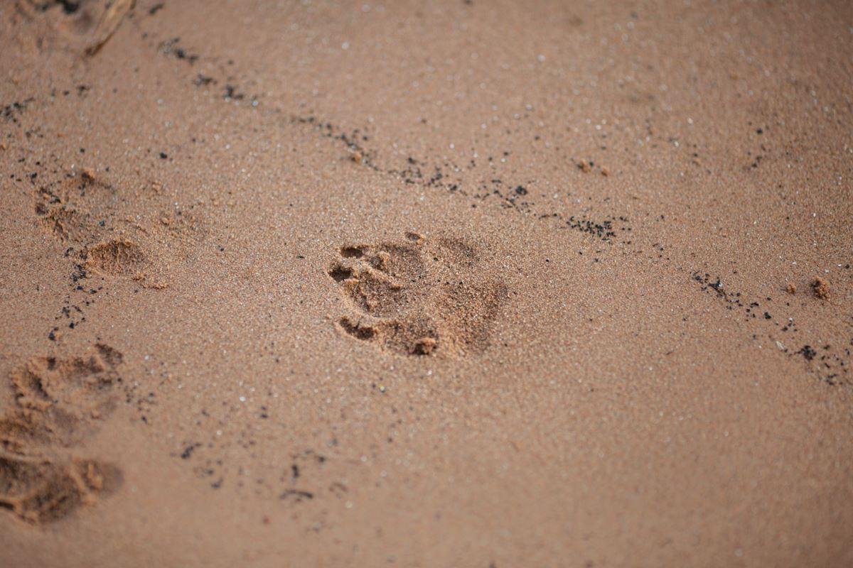 Hundefotoshooting-Vizsla-Hundefotograf-Main-See-Wasser-Hund (1)