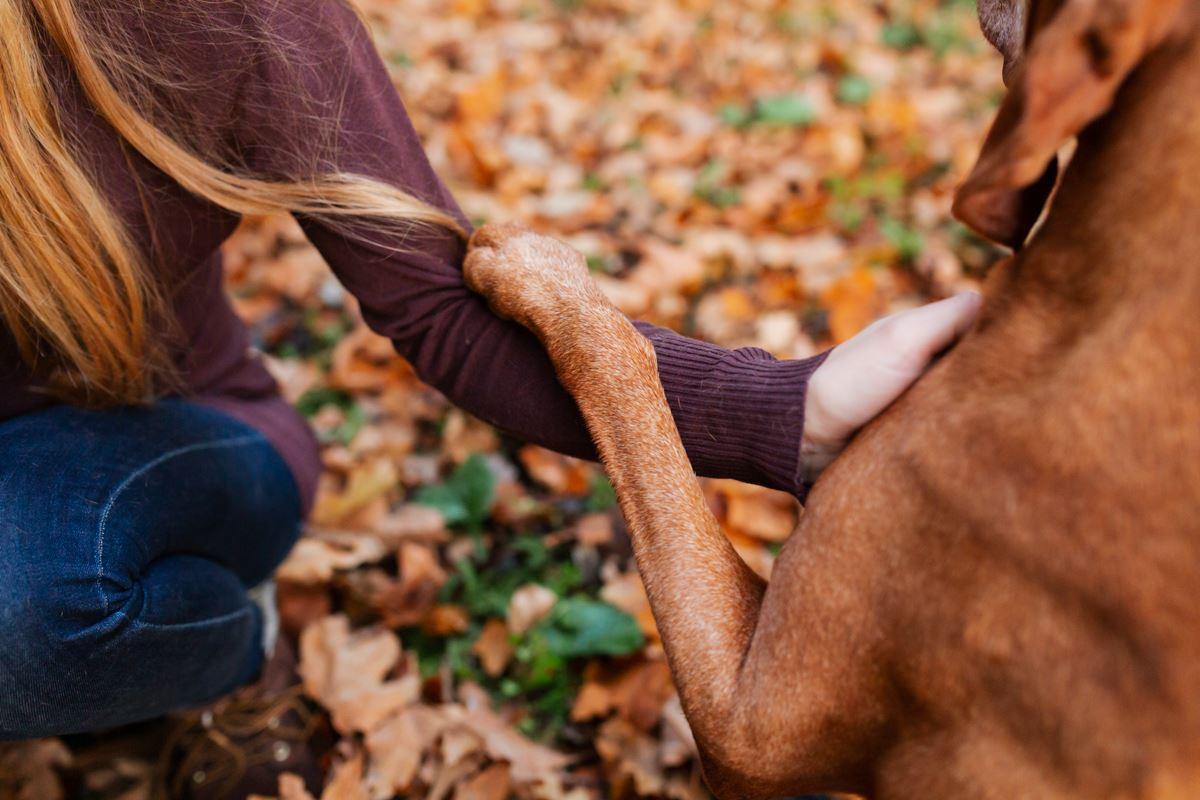 Hundefotoshooting-Vizsla-Hundefotograf-Main-See-Wasser-Hund (11)