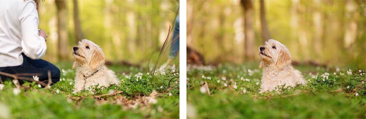 Hundeleine-Fotoretusche