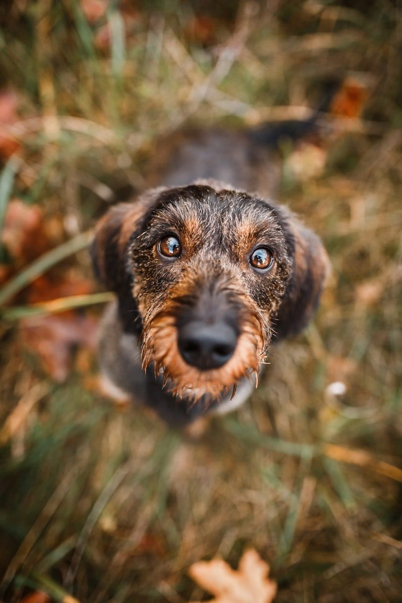 Fotografin Tiere Unterfranken Würzburg Hunde Fotoshooting