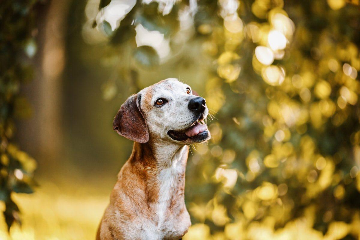 Fotografin Bamberg Hund Hundeschule Welpe Straßenhund
