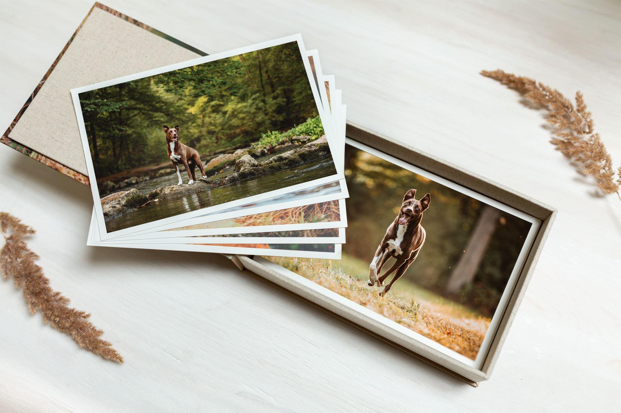 Professionelle-Fotobox-Hundebox-Fotoshooting-Tierschutzhund