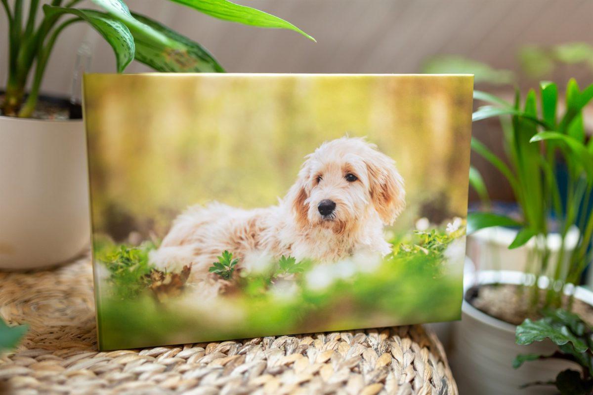 Professionelles-Hunde-Fotoshooting-Fotoprodukte-Fotobox