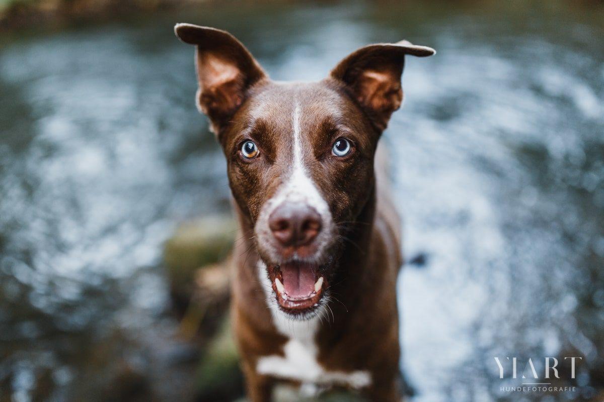 Tierschutzhund-Tierschutz-Tierheim-Hund-Tierheimhund-Adopt-Dont-Shop-Diego