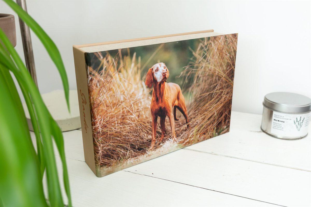 Vizsla-Fotoshooting-Box