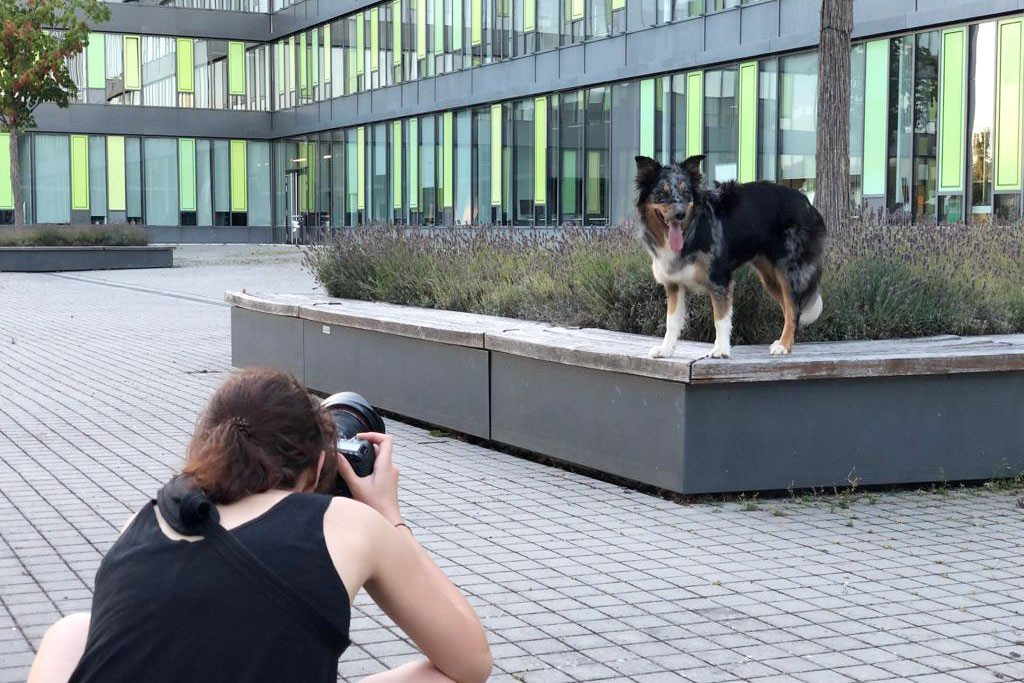 Würzburg-Hunde-Fotoshooting-Hundefotograf-Wüdogs-Kalender-Hundekalender