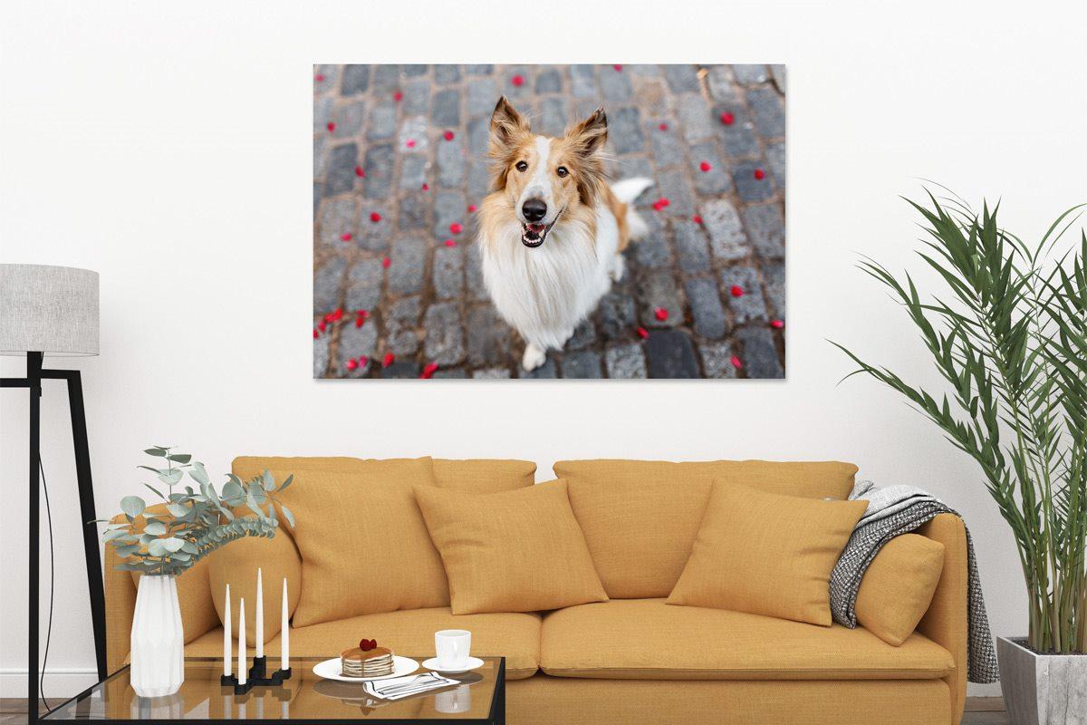 Wandbild-Leinwand-Alu-Hund
