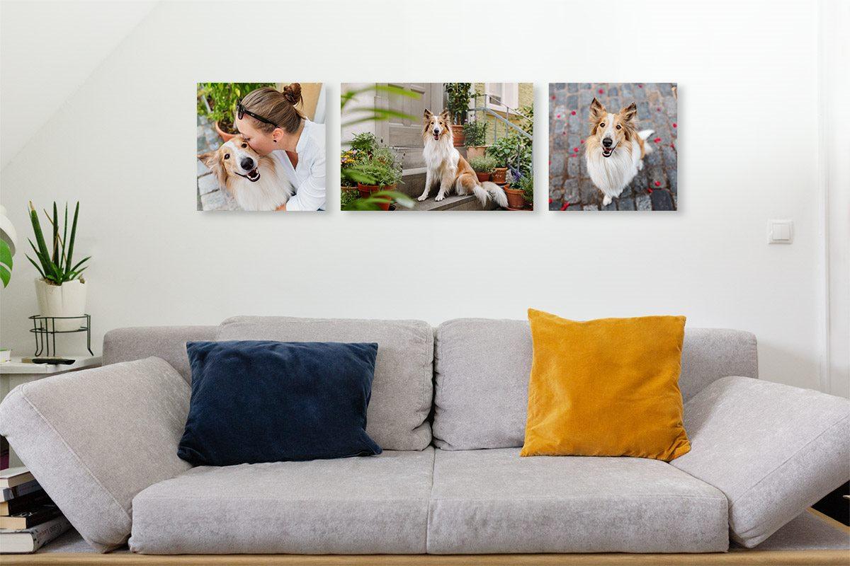Fotoprodukte-Wandgalerie-Hundefotografie-Hunde