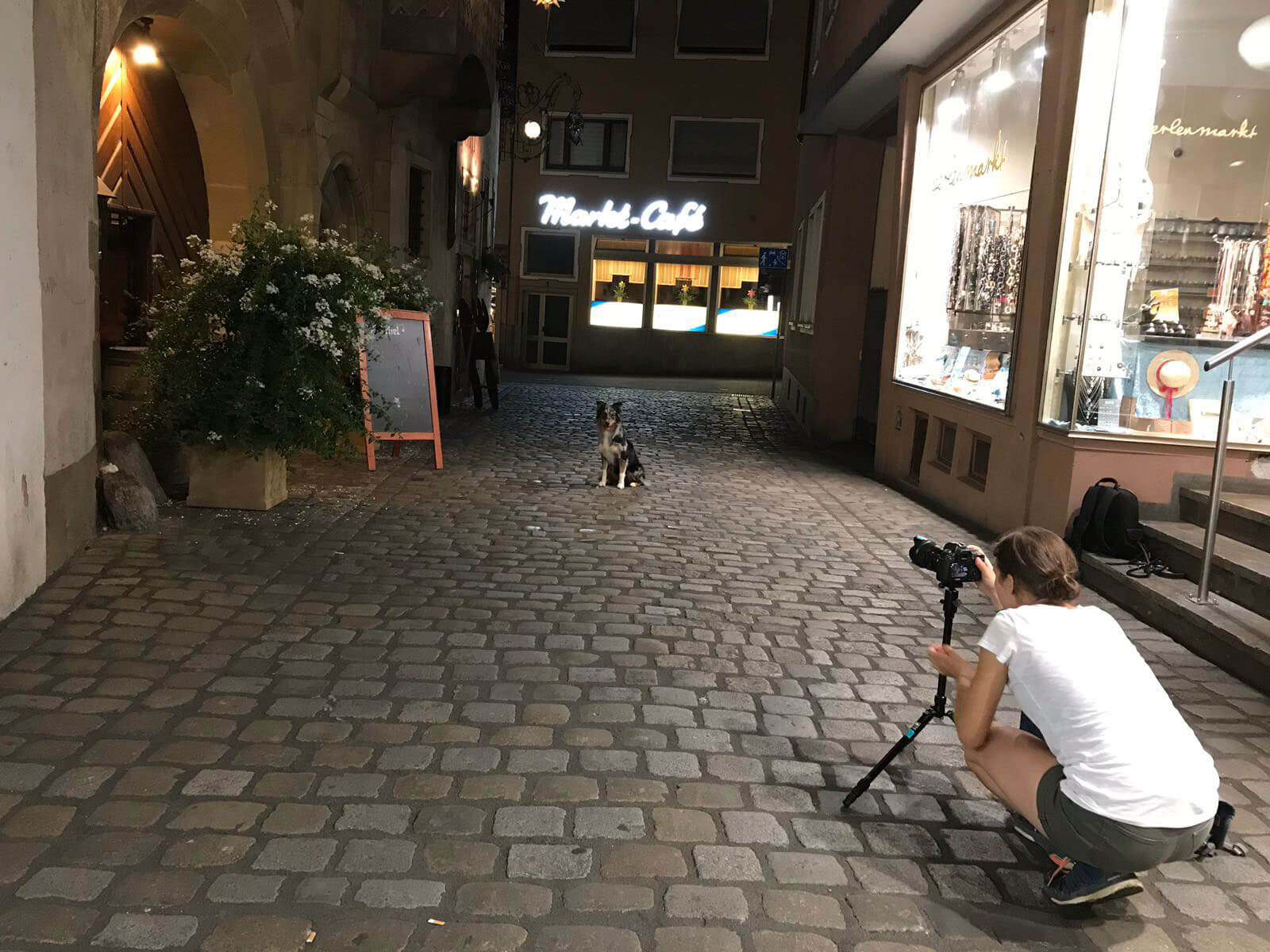 Tierfotografin | Würzburg Hunde Kalender | Yasemin Ikibas