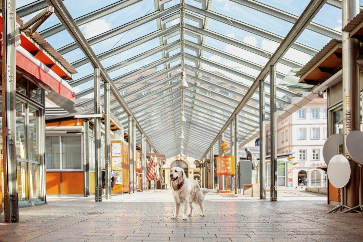 Marktplatz Würzburgkalender Yasemin-Ikibas-Wü-Dogs-Kalender-Spendenkalender-Würzburg-Hundekalender-Hunde-Kalender-2021