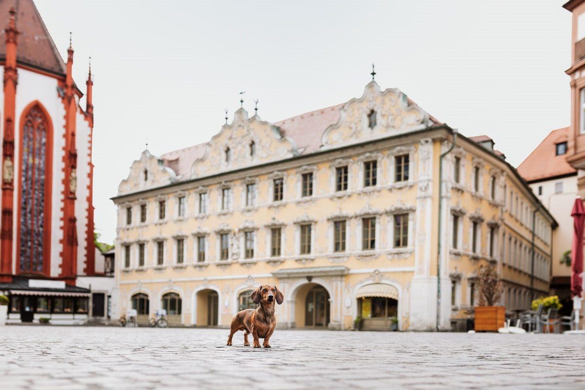 Falkenhaus Yasemin-Ikibas-Wü-Dogs-Kalender-Spendenkalender-Würzburg-Hundekalender-Hunde-Kalender-2021