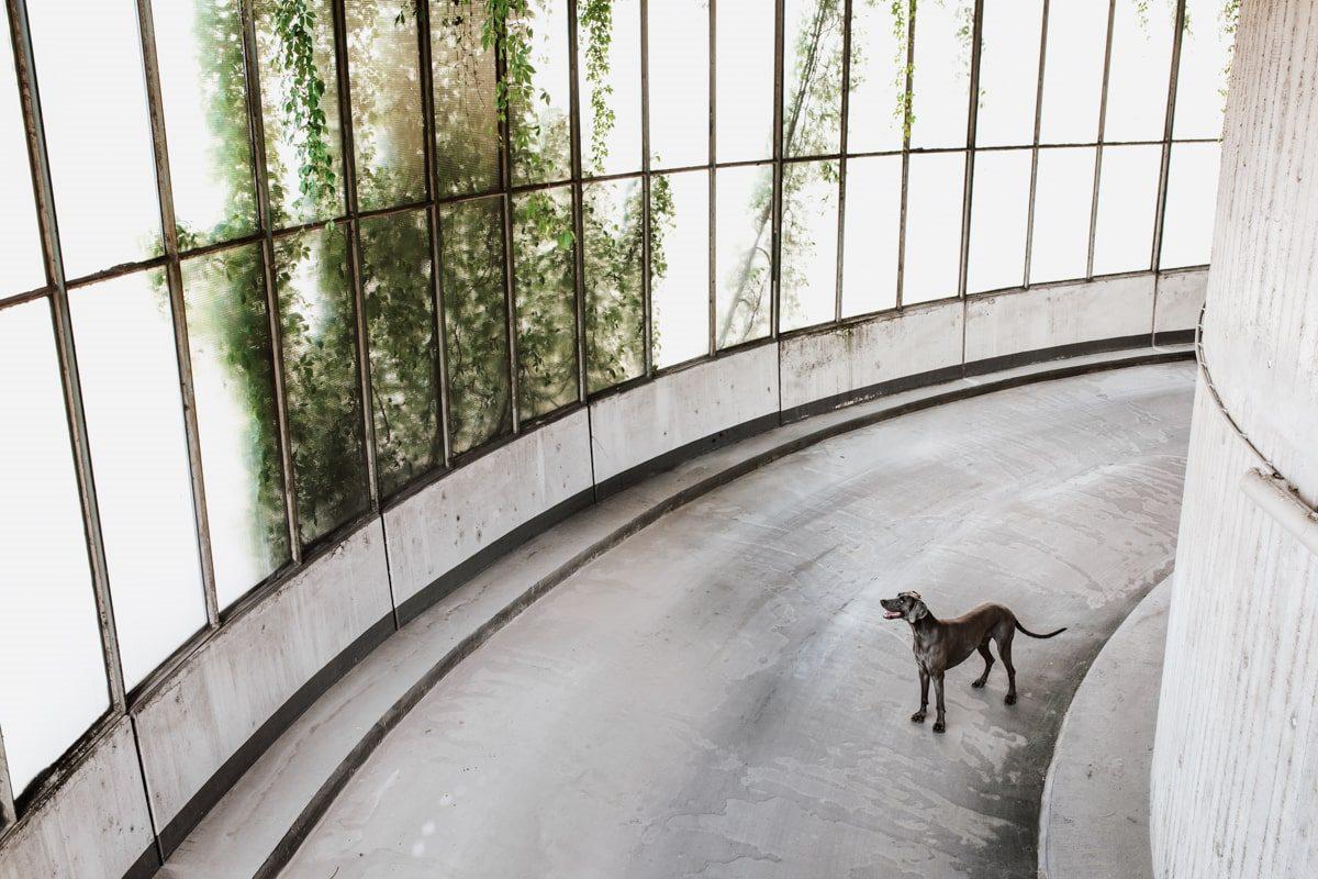 Yasemin-Ikibas-Wü-Dogs-Kalender-Spendenkalender-Würzburg-Hundekalender-Hunde-Kalender-2021 - Parkhaus
