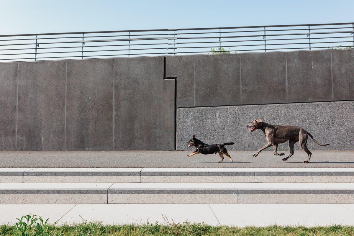 Yasemin-Ikibas-Wü-Dogs-Kalender-Spendenkalender-Würzburg-Hundekalender-Hunde-Kalender-2021 Hubland