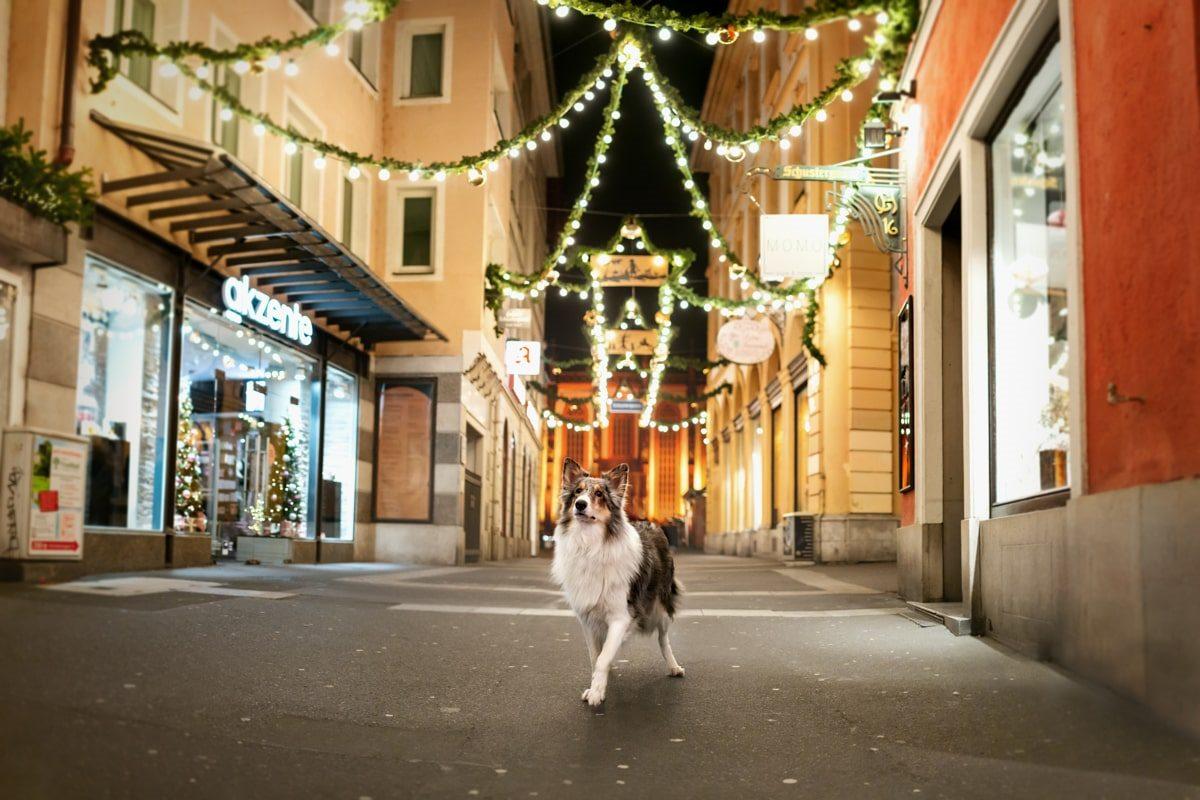 Yasemin-Ikibas-Wü-Dogs-Kalender-Spendenkalender-Würzburg-Hundekalender-Hunde-Kalender-2021 - Schustergasse