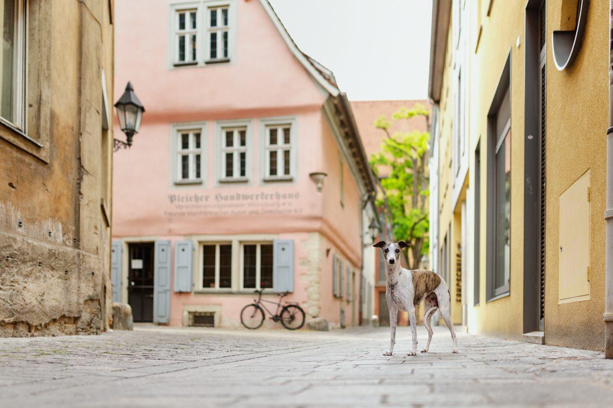 Yasemin-Ikibas-Wü-Dogs-Kalender-Spendenkalender-Würzburg-Hundekalender-Hunde-Kalender-2021-Hubland-Altstadt-Marktplatz (1)