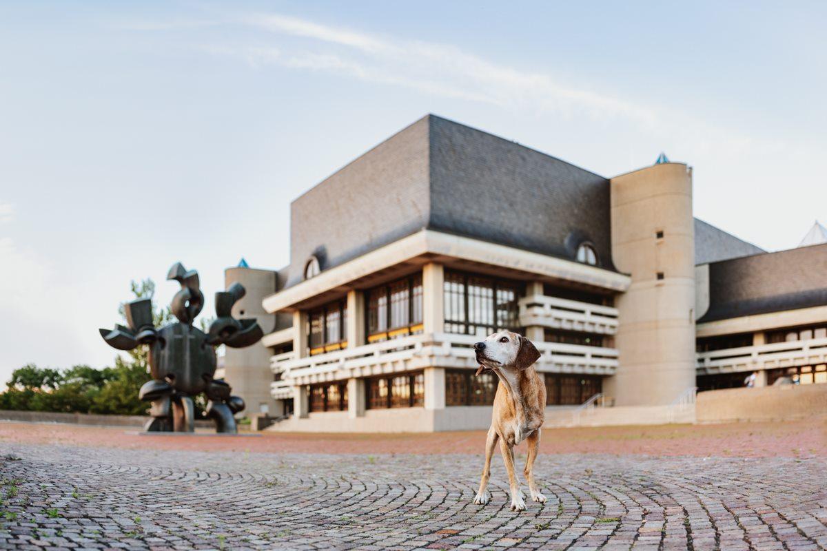 Yasemin-Ikibas-Wü-Dogs-Kalender-Spendenkalender-Würzburg-Hundekalender-Hunde-Kalender-2021-Hubland-Altstadt-Marktplatz (2)