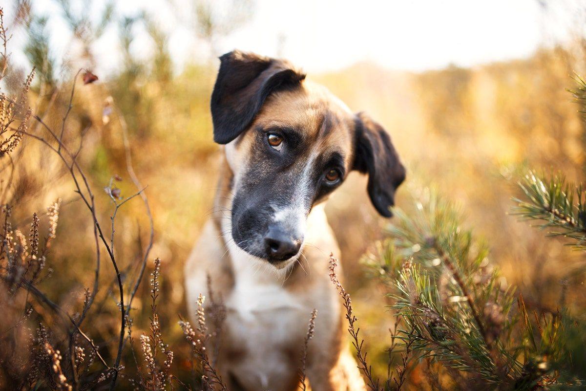 Tiere Unterfranken Würzburg Eisingen Hunde Fotoshooting