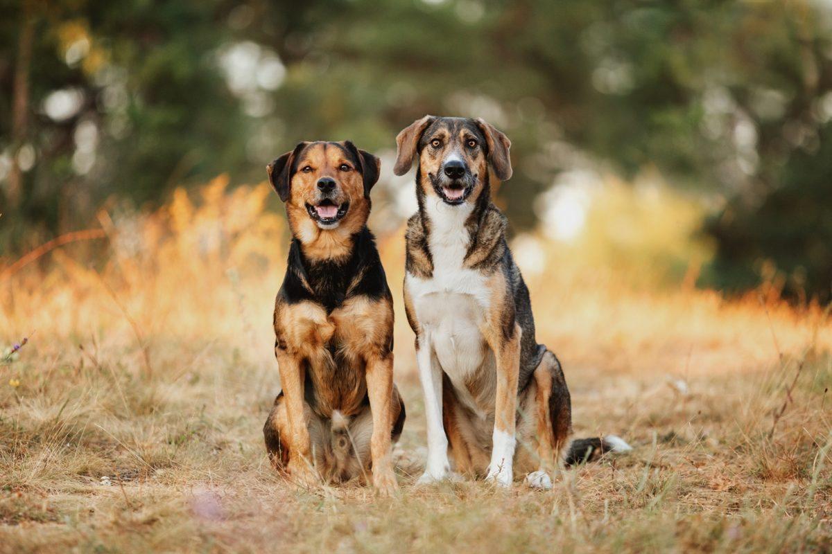 hunde-tierschutz-fotoshooting-mix-rumänien