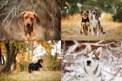 Die beste Jahreszeit für ein Hunde Fotoshooting