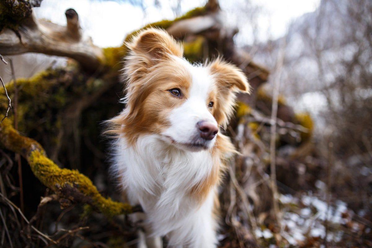 Fotografin Marktheidenfeld Mainspessart Unterfranken Hund