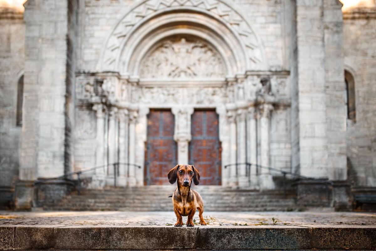 Hundekalender Würzburg 2019