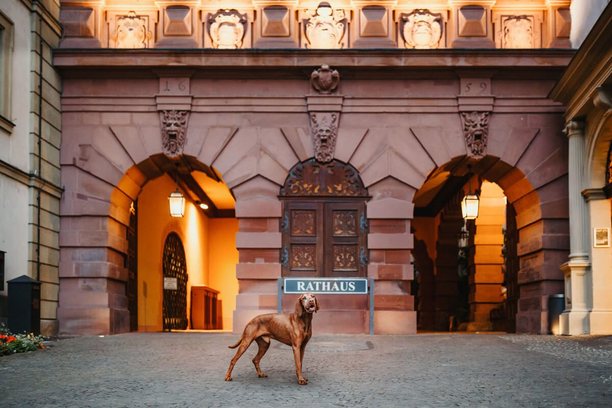 Alte Mainbrücke Würzburg, Collie Hund